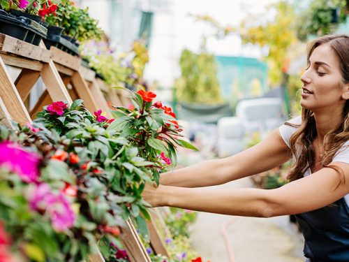 Guide to florists and flower shops in Brighton